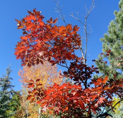 fall-color-big-bear-mp-renfrew