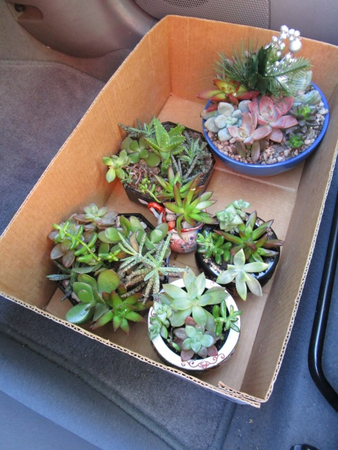 succulents-in-car-dec-2016-mpr