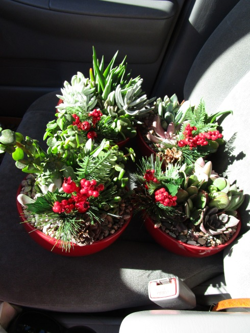 succulents-in-car-home-depot-dec-2016-mpr
