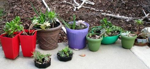 succulents-11-16-melanie-renfrew
