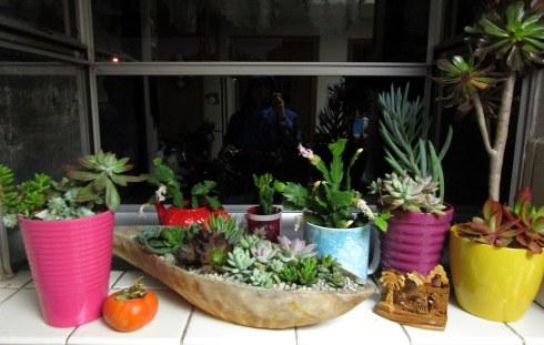 succulents-manger-scene-melanie-renfrew-12-16