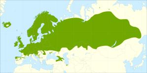 White birch, AgroAtlas.ru