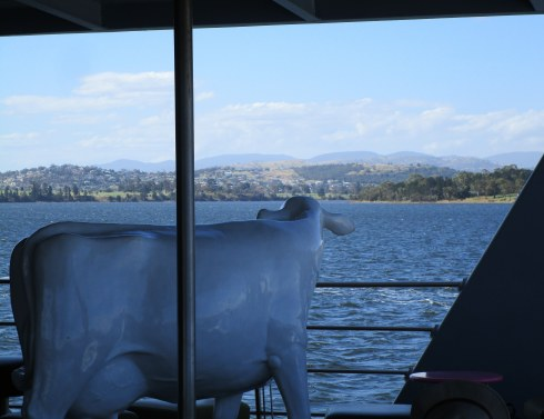 cows-view-hobart-ferry-mp-renfrew-1-10-17