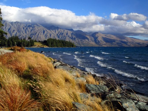 l-wakatipu-bunch-grasses-mp-renfrew
