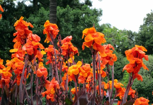 orange-lilies-melbourne-mp-renfrew