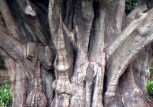 trunks-1-3-17-mp-renfrew-13